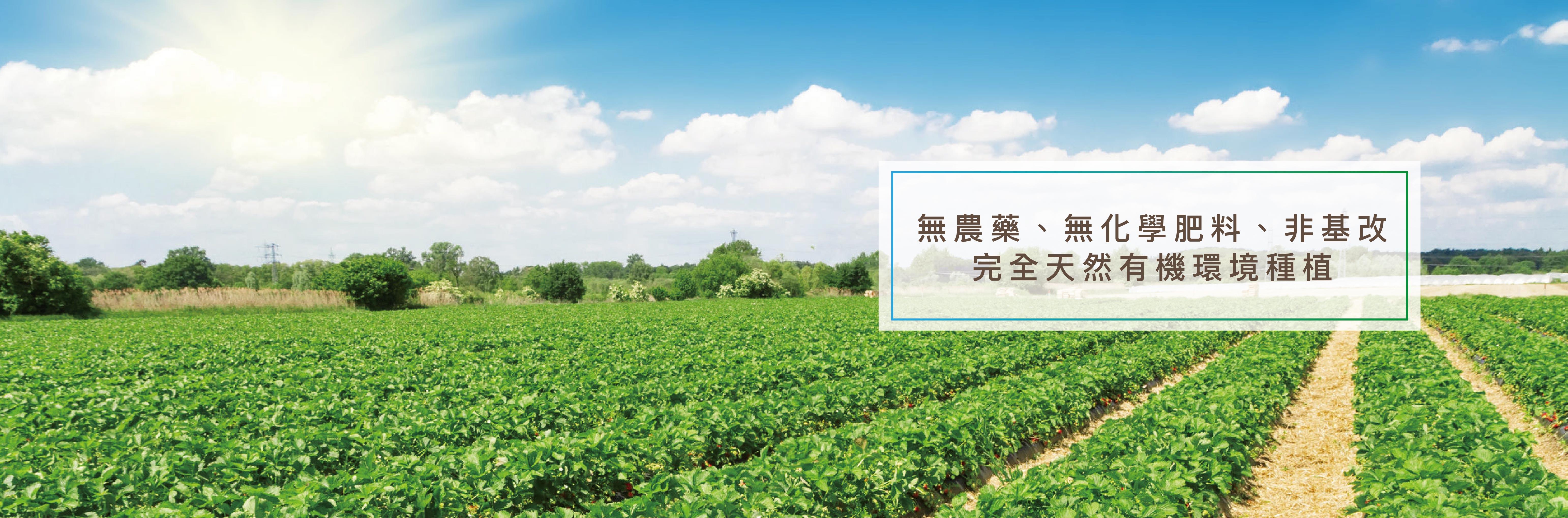 天然有機環境種植_無農藥、無化肥、非基改